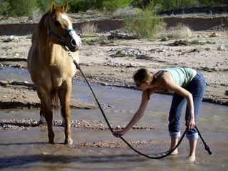 Lead_a_horse_to_water